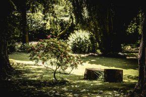 Garden-vi